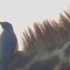 Thumb dsc01478 main